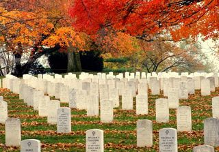 Arlington-national-cemetery-mitch-hyman